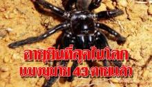 แมงมุมอายุ 43 ปี ตายแล้วหลังถูกตัวต่อโจมตี นักวิจัยระบุเป็นแมงมุมอายุยืนที่สุดในโลก !!