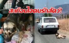 คนรักสัตว์มีเดือด! คลิปสะเทือนใจ น้องหมาโชคร้าย ถูกเจ้าของมัดกับท้ายรถลากไปตามถนน! (คลิป)