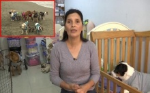 ใจบุญ!! หญิงเปรูเปิดบ้านเป็นสถานดูแลสุนัขป่วยกว่า 70 ตัว