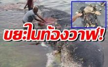 สุดสลด! ผ่าซากท้องวาฬเกยหาด พบขยะหนักเกือบ 6 กิโล!!