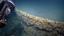 ทะเลสาบแห่งความตาย! เขตมรณะที่อยู่ใต้ทะเลอีก ฆ่าสิ่งมีชีวิตแทบทุกชนิดที่หลงเข้าไป