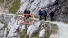 ตร.ล่าตัวแก๊งไต่เขา 7 คน รุมต้อนหมูป่าตัวเดียวให้ดิ่งกระแทกหน้าผาตาย (คลิปอาจสะเทือนใจ)