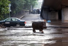 น้ำท่วมครั้งใหญ่ในจอร์เจียตาย9 สัตว์ป่าหลุดจากสวนสัตว์เพียบ! (ชมคลิป)