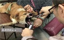 """สั่งปิดคลินิกเถื่อน """"ตัดเส้นเสียงหมา"""" ผงะ!! วิธีทำง่ายๆ ไม่ล้างเครื่องมือผ่าตัด!! (มีคลิป)"""