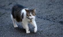 """แมว """"แลร์รี"""" งานเข้า! หลังชาวเน็ตพบหนูวิ่งผ่านหน้าบ้านนายกฯ อังกฤษ"""