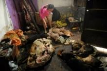 จีนบุกทลายโรงเชือด สุนัข ผิดกฎหมายในมณฑลเหอหนาน