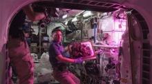 สุดยอด!! NASA ปลูกผักในอวกาศไว้กินเองได้แล้ว!!