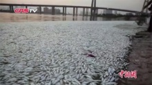 พบปลาตายเกลื่อนที่จีน หลังเหตุระเบิดโกดังเก็บสารเคมี