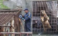 ช่วยได้แล้ว!! หมีหิวโหยถูกขังในร้านอาหาร 2 ตัว น้ำใจชาวเน็ตหลั่งไหล (มีคลิป)