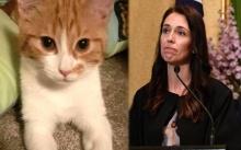 นายกฯ หญิงนิวซีแลนด์สุดเศร้า..แมวหมายเลขหนึ่งถูกรถชนตาย!! (มีคลิป)