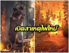 เปิดสาเหตุ ไฟป่าเเอมะซอน ปอดสำคัญของโลกที่กำลังถูกทำลาย
