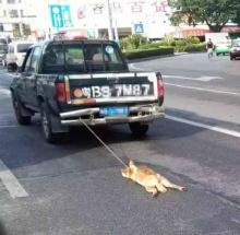 ช็อกโลก! ใจชั่วรัดคอสุนัขแล้วเอารถลากไปกับถนนจนขาดใจตาย