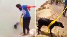 ชายชาวซิกข์ยอมผิดหลักศาสนา สละผ้าโพกเพื่อช่วยเหลือสุนัข