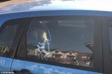 สุดช็อค!! สุนัข 3 ตัวเกือบตาย เหตุถูกทิ้งในรถเกือบชั่วโมง ร้อนจัดเหมือนเตาอบ