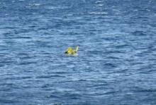ระทึก!! ทารกวัย10เดือนในห่วงยาง ถูกลมพัดลอยออกทะเล ยามฝั่งระดมช่วย(คลิป)