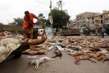 สะเทือนใจคนรักตูบ เทศบาลปากีฯวางยาฆ่าสุนัขจรจัด