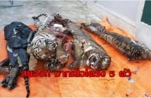 สยอง! พบซากเสือโคร่ง! ผ่าชำแหละอวัยวะ ในตู้แช่แข็งเวียดนาม! (มีคลิป)