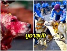 Kukur Tihar เทศกาลน่ารัก ที่มีขึ้นเพื่อบูชาสุนัขในเนปาล
