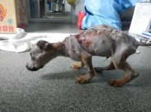 ลูกสุนัขแทะมือถือ!! เจอเจ้าของเอาน้ำร้อนราดแล้วโยนลงตึกสุดอนาถ(คลิป)