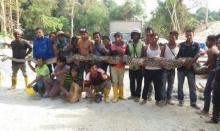 โค่นสถิติ!! พบงูเหลือมยักษ์ขนาด 8 เมตร ยาวที่สุดในโลก