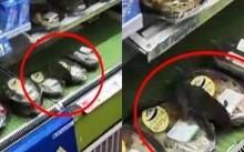 หนูยักษ์บุกร้านสะดวกซื้อ!!! แอบกินอาหารบนชั้นวางของ ชาวเน็ตจีนแห่แชร์ภาพ!!