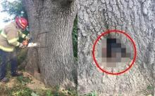 อึ้งสิบตลบ!!! ตำรวจได้ยินเสียงแปลกๆ จากในต้นไม้!! หาเลื่อยมาเจาะ ไปเจอสิ่งนี้!!!