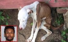 กินอึประทังชีวิต!! หมาถูกล่ามทิ้งไว้นาน 3 เดือน ผอมซี่โครงขึ้น! เจ้านายถังแตกหนีไปเฉยๆ