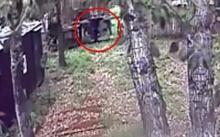 หนุ่มเมาถูกหมีกัดแขนขาด!! หลังปีนกรงเพื่อเอาอาหารไปยื่นให้อย่างใกล้ชิด!!