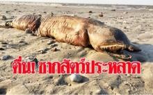 แตกตื่น!!! เจอซากสัตว์ประหลาดโผล่ชายหาด หลังโดนพายุซัดถล่มขึ้นมาเกย