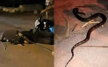 หวังจะเอาไปขาย หนุ่มจับงูเหลือมยาว 3 เมตร ขับรถจยย.กลับบ้าน สุดท้ายถูกรัดคอดับกลางทาง!!