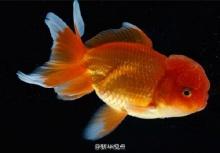 แม่ใจร้าย บังคับให้ลูกสาวกินซากปลาทอง 30 ตัว