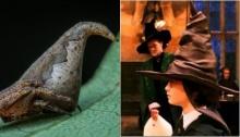ทึ่ง!!แมงมุมพันธุ์ใหม่รูปร่างคล้ายหมวกคัดสรรในเรื่องแฮร์รี พอตเตอร์