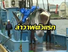 ญี่ปุ่น เปิดล่าวาฬเชิงพาณิชย์ครั้งแรกในรอบ 31 ปี