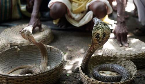 ผลการค้นหารูปภาพสำหรับ บูชา งู