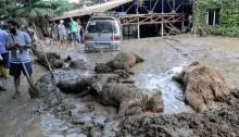 เปิดภาพสะเทือนใจ สัตว์ป่า 600 ตัวหนีน้ำท่วมจากสวนสัตว์สุดท้ายตายเกลื่อนเมือง
