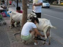 นมจากเต้าคู่รักชาวจีนไอเดียกระฉูด รีดนมแพะสดๆ ริมถนน ขายดีเป็นเทน้ำเทท่า