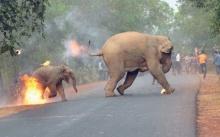 จังหวะสะท้อนใจ!! ช้างแม่ลูกถูกม็อบปาระเบิดเพลิงไฟลุกท่วม ชนะเลิศภาพถ่ายสัตว์ป่าแห่งปี!! (มีคลิป)