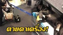 สลดหนัก ลูกสุนัขตายคาเครื่องบิน หลังลูกเรือให้นำใส่ช่องเก็บของ 3 ชั่วโมง