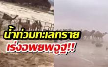 ดับแล้ว 35 ราย!! น้ำท่วมทะเลทราย ซาอุฯ เร่งอพยพอูฐและผู้คน (คลิป)