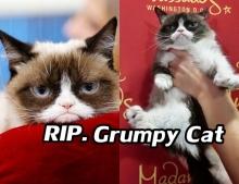 แมวหน้าบึ้ง Grumpy Cat  ขวัญใจชาวเน็ต ลาโลกแล้ว!
