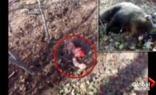 ระทึก!หมีป่าจับสาวรัสเซียฝังดิน บาดเจ็บสาหัสโชคดีจนท.ช่วยทัน (ชมคลิป)