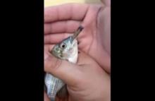 ชาวเน็ตถล่ม2หนุ่มเล่นพิเรนทร์ จับปลาสูบกัญชาก่อนปล่อยน้ำ