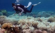 เศร้า! นักวิทย์เผยแนวปะการังวิกฤต ฟอกขาวระยะสุดท้าย