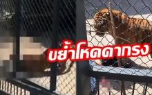 สะพรึงทั้งสวนสัตว์!! เสือฆ่าคนเลี้ยงสยอง ต่อหน้าคนดู ชี้เลี้ยงมาตั้งแต่เล็ก!!