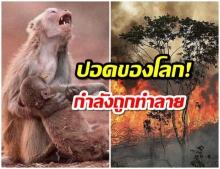 เหตุการณ์สลด! ป่าแอมะซอน ไฟไหม้อย่างหนัก ผืนป่าใหญ่ถูกทำลาย